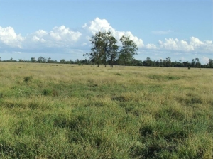 COMMERCIAL SITE OR MIXED FARMING, THE CHOICE IS YOURS