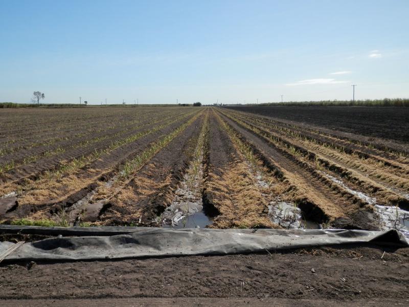 84 Acres Cane Farm - Horseshoe Lagoon - Irrigation